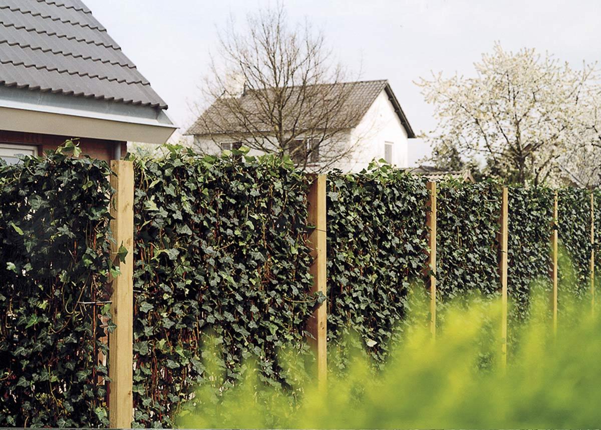 Zielone ekrany - czyli gotowe zielone ogrodzenia, ściany, pokrycia i elementy architektury